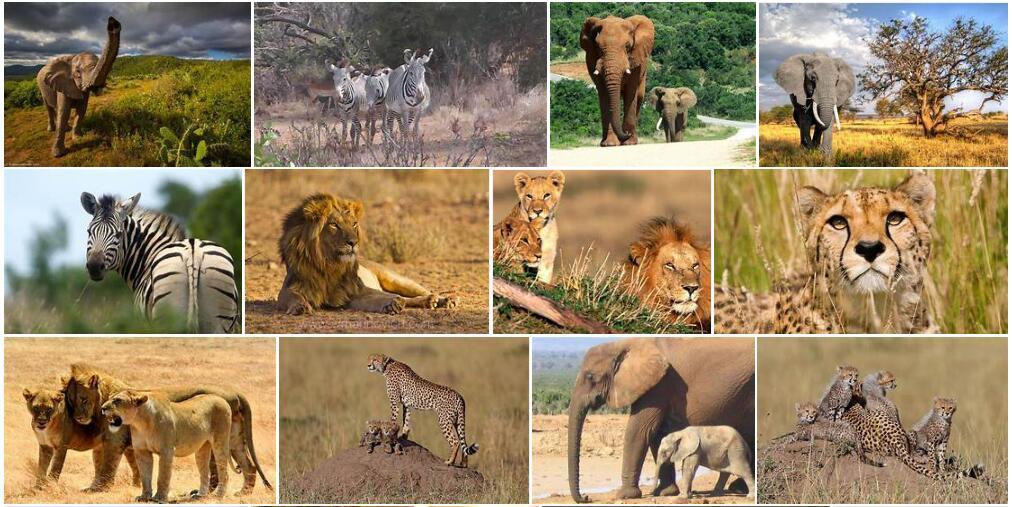 Africa Wildlife 2