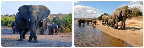 Top Attractions in Botswana